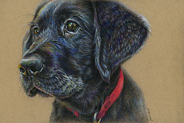 Lionel - Pet portrait by Geraldine Simmons