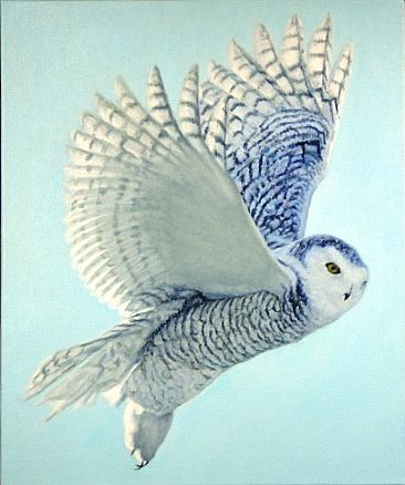 Hope has Wings - Snowy Owl by  Harlan