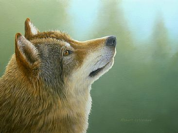 Young Wolf - Timber Wolf by Robert Schlenker