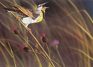 Among the Fields of Gold - Western Meadowlark by Raymond Easton