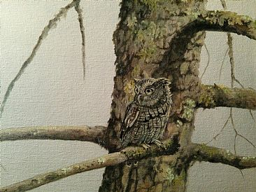 Out of The Woodwork - Eastern Screech Owl by Raymond Easton