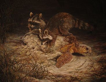 Loggerhead eggs are only dinner for these raccoons painting nature