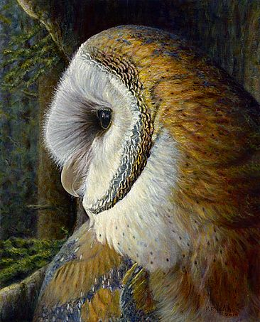 A Hole with a View - Barn Owl by Kim Middleton