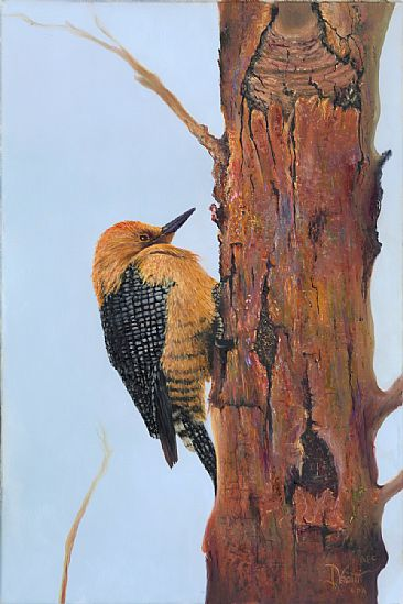 Gila Woodpecker - Wild Life by Jerry Venditti