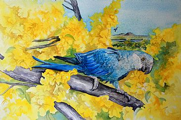 Ararinha Azul - Spix's Macaw - The Rarest Bird in the World by Kitty Harvill