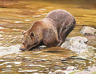 Brown Bear Fishing - Brown Bear by James Fiorentino