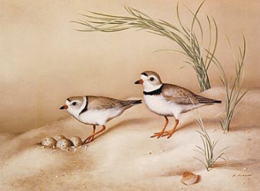 Into the Light - Piping Plovers - Birds by Phyllis Frazier