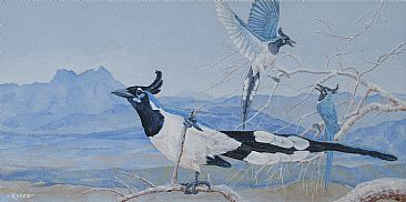 Cacophony in Blue - Black-throated Magpie Jays by Kim Duffek
