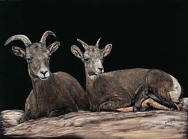 Eight months later - two desert long horn sheep by Marcia Barclay