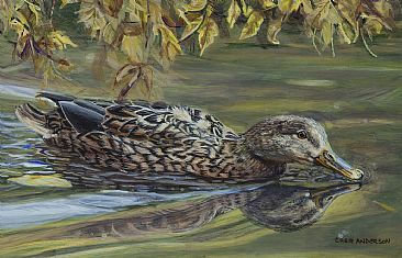 Miss Mallard - Female Mallard Duck by Cher  Anderson