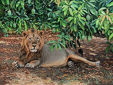 Mangoes and Lion - Asiatic Lion by Chirag Thumbar