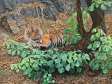 Tiger's Lounge - Bengal Tiger by Chirag Thumbar