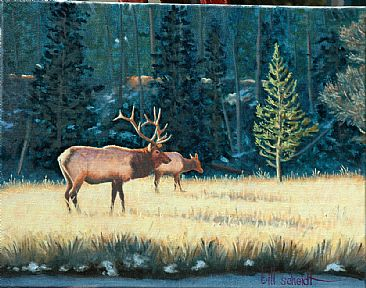Mr. Majestic - American Elk by Bill Scheidt