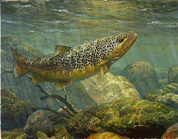 Brown Trout Painting Art By Mark Susinno