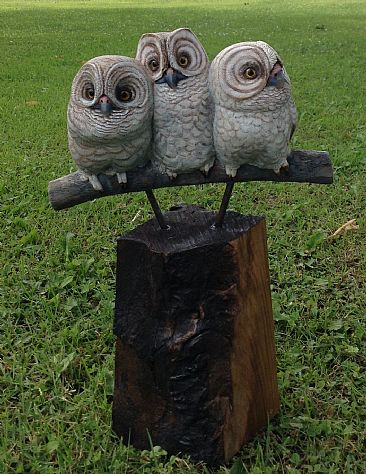 Make Some Room - Immature owls by Betsy Popp