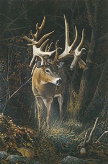Fortunate Son - Deer by Christopher Walden