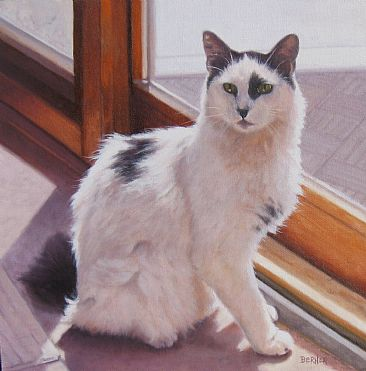 John's Cat - Cat sitting in the sun by Sally Berner