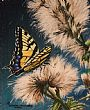 Thistle Down - Thistles & Butterfly by Cindy Sorley-Keichinger&nbsp(2)