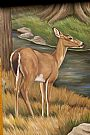 Deer - deer by Cindy Billingsley&nbsp(2)