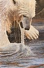 Ice Water - Polar Bear by Joyce Trygg&nbsp(2)
