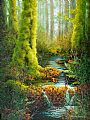 Stream of Life - Temperate rain forest by Patricia Banks&nbsp(2)