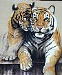 Brothers - Tiger by Florence Cadène&nbsp(2)