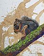 Breakfast Time - squirrel by Linda Harrison-Parsons&nbsp(2)